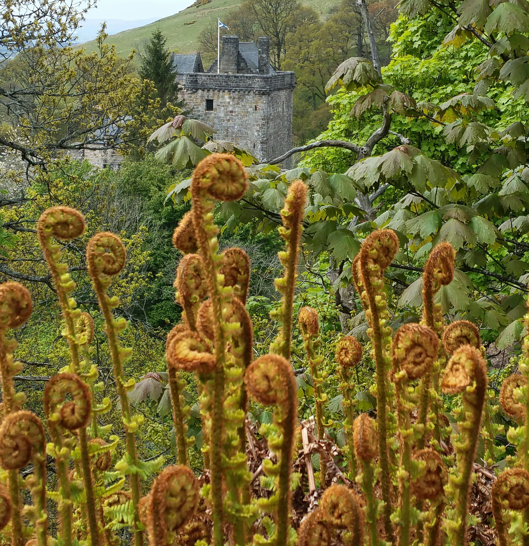 Castle Campbell + ferns 052019